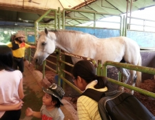 family-horse-care-and-riding-trip-14