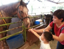 family-horse-care-and-riding-trip-20