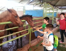 family-horse-care-and-riding-trip-24