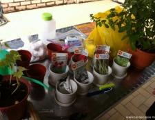 junior-gardeners-holiday-program-13