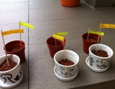 junior-gardeners-holiday-program-14