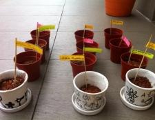 junior-gardeners-holiday-program-15